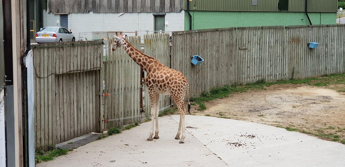 Knowsley Safari Zoo